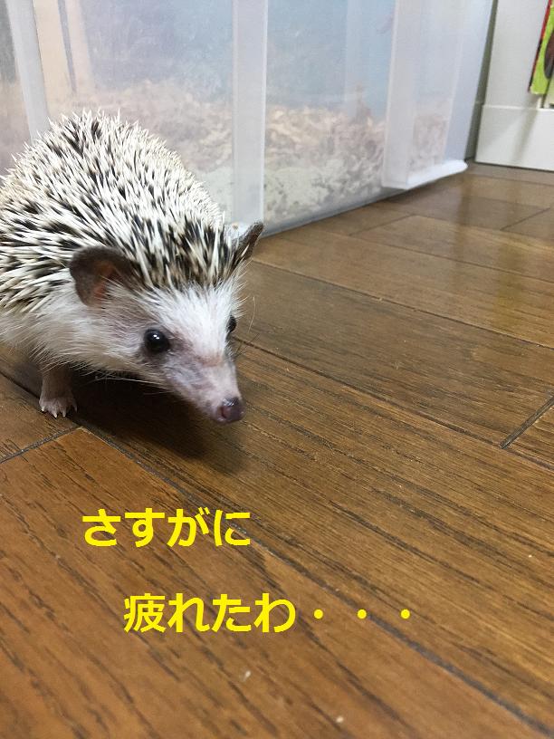 f:id:ogihara0308:20180419002524p:plain