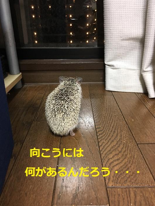 f:id:ogihara0308:20180501002742p:plain