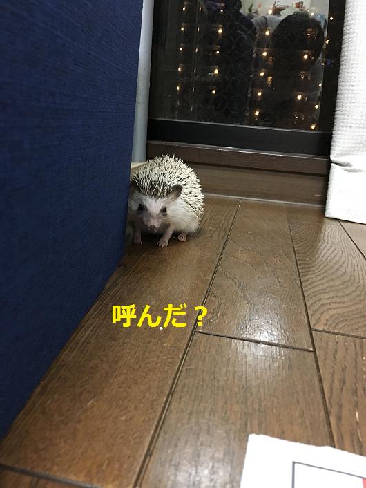 f:id:ogihara0308:20180501003055p:plain