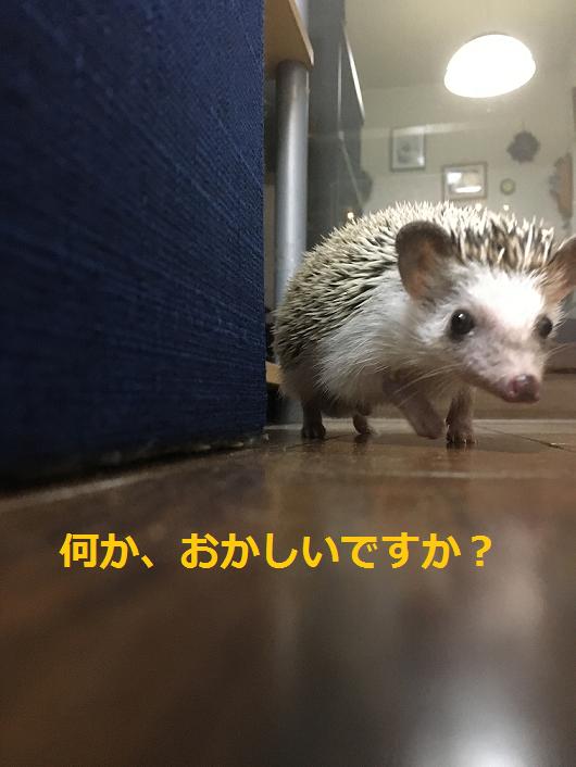 f:id:ogihara0308:20180515205050p:plain