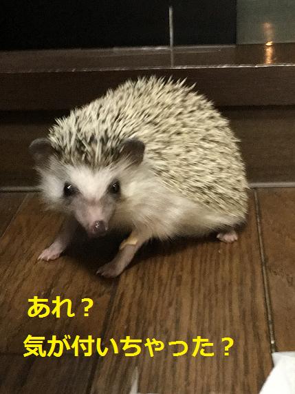 f:id:ogihara0308:20180528214910p:plain