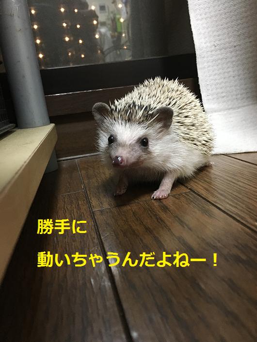 f:id:ogihara0308:20180608211542p:plain