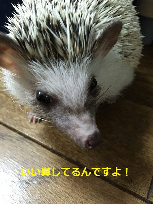 f:id:ogihara0308:20180608212818p:plain