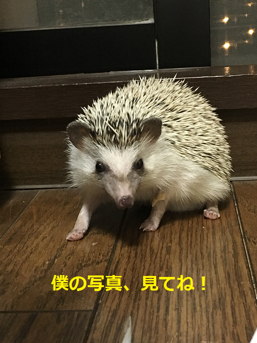 f:id:ogihara0308:20180615211943p:plain