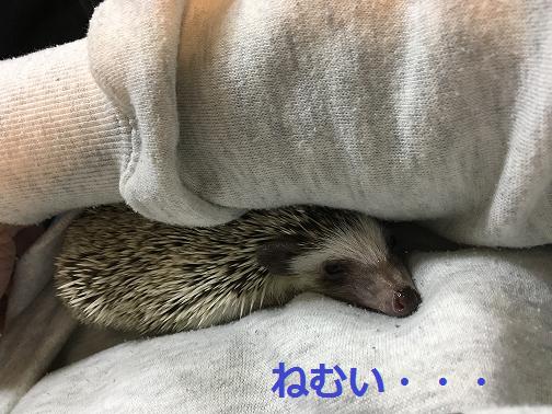 f:id:ogihara0308:20180615212500p:plain