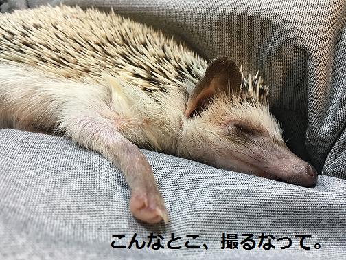 f:id:ogihara0308:20180615212558p:plain