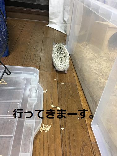 f:id:ogihara0308:20180615212645p:plain