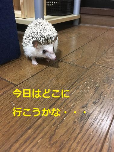 f:id:ogihara0308:20180615212707p:plain