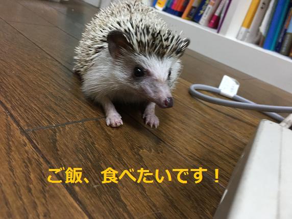 f:id:ogihara0308:20180615212813p:plain
