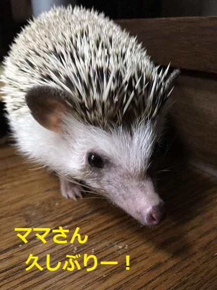 f:id:ogihara0308:20180625212803p:plain