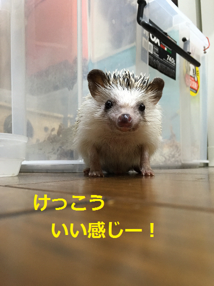 f:id:ogihara0308:20180703204124p:plain