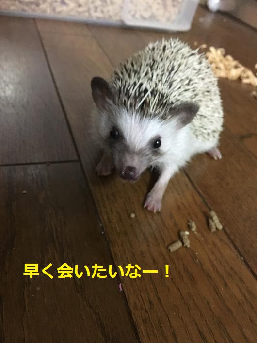 f:id:ogihara0308:20180802211242p:plain