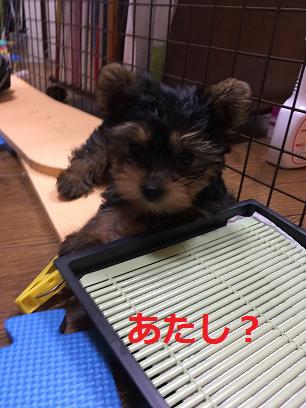 f:id:ogihara0308:20180814213721p:plain