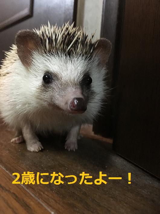 f:id:ogihara0308:20180829210059p:plain