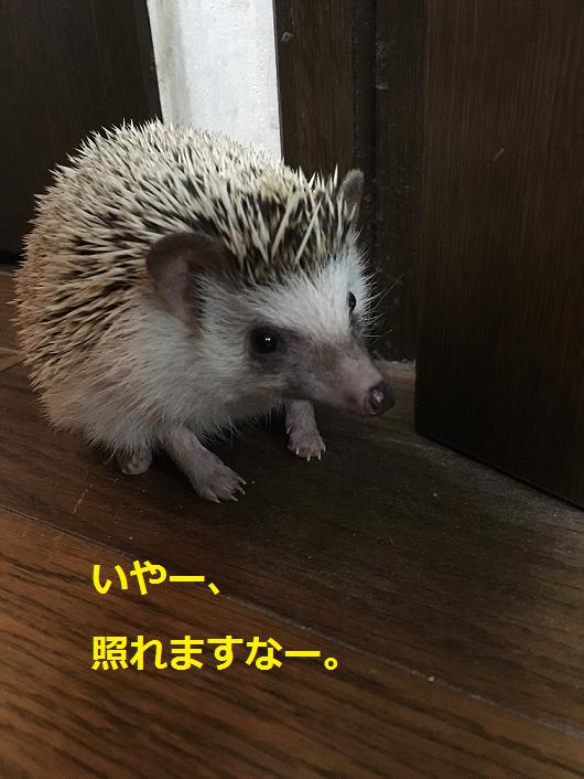 f:id:ogihara0308:20180829210629p:plain