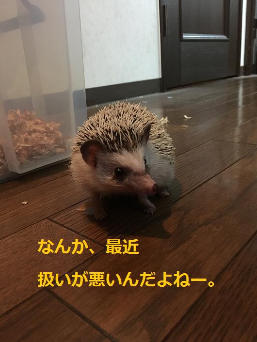 f:id:ogihara0308:20180829210849p:plain