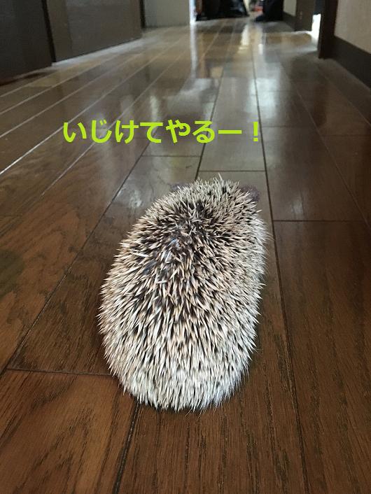f:id:ogihara0308:20180829210923p:plain