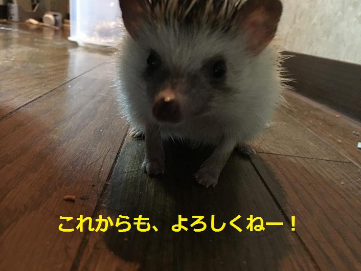 f:id:ogihara0308:20180829211710p:plain
