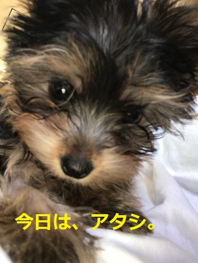 f:id:ogihara0308:20180907202641p:plain