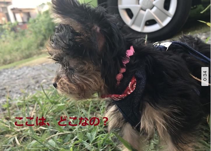 f:id:ogihara0308:20180907203521p:plain