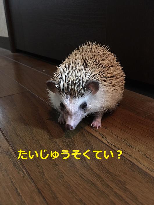 f:id:ogihara0308:20180919191041p:plain