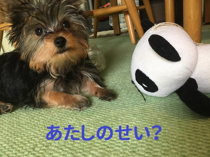 f:id:ogihara0308:20181009205757j:plain