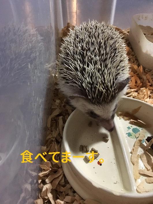 f:id:ogihara0308:20181009210026j:plain