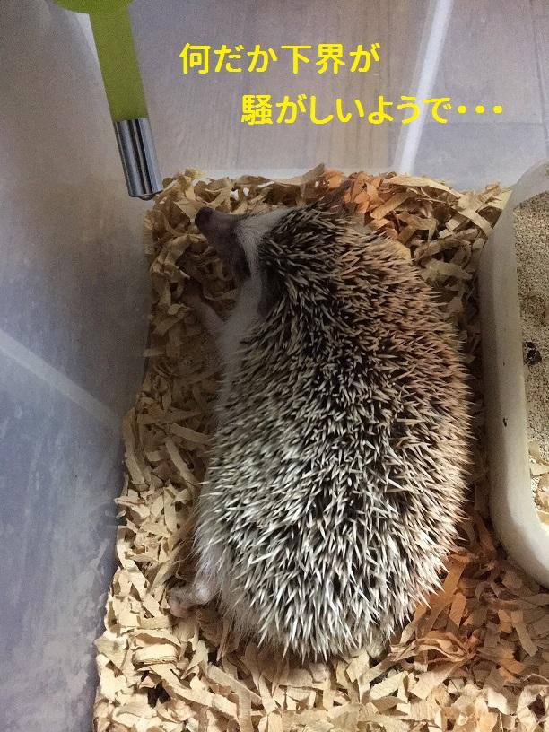 f:id:ogihara0308:20181009210105j:plain
