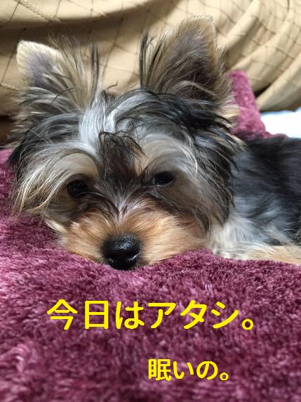 f:id:ogihara0308:20181026212141p:plain