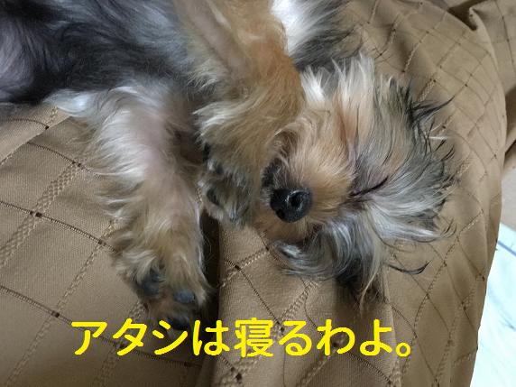 f:id:ogihara0308:20181110164256p:plain