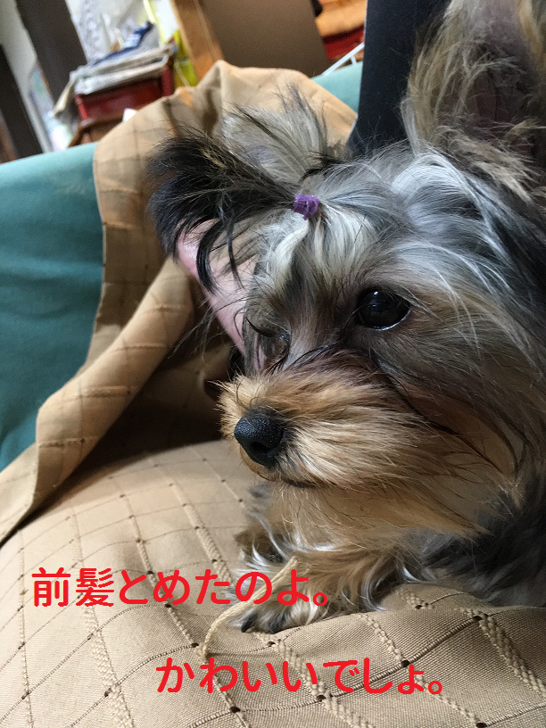 f:id:ogihara0308:20181119210151p:plain
