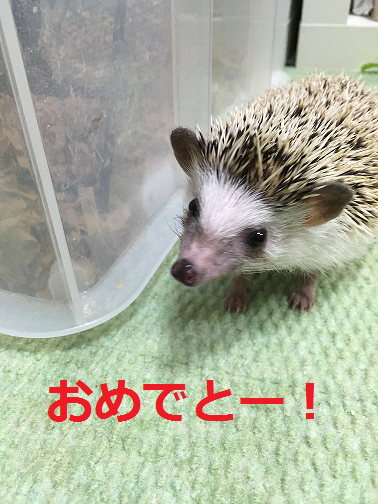 f:id:ogihara0308:20190106012415p:plain