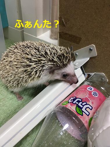 f:id:ogihara0308:20190106013313p:plain