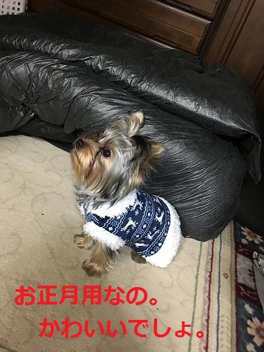 f:id:ogihara0308:20190106013515p:plain
