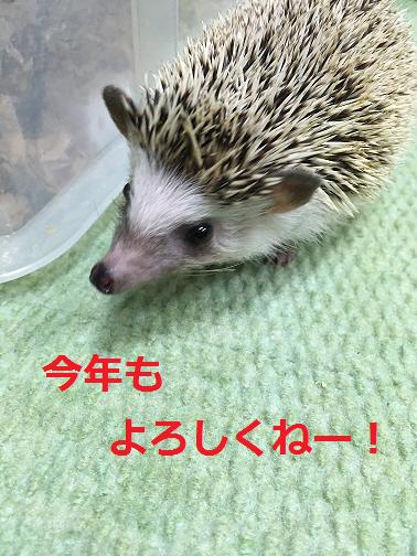 f:id:ogihara0308:20190106013818p:plain