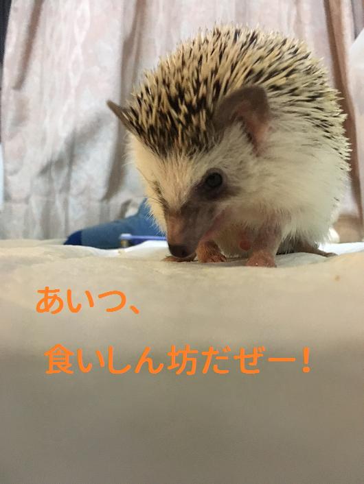 f:id:ogihara0308:20190130210401p:plain