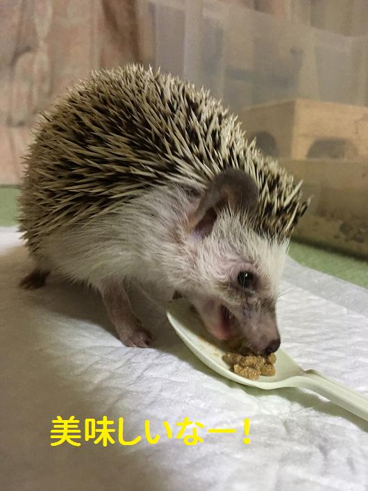 f:id:ogihara0308:20190130210957p:plain