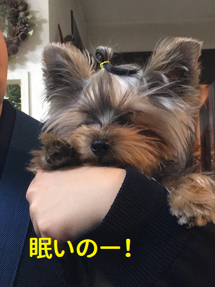 f:id:ogihara0308:20190130211740p:plain