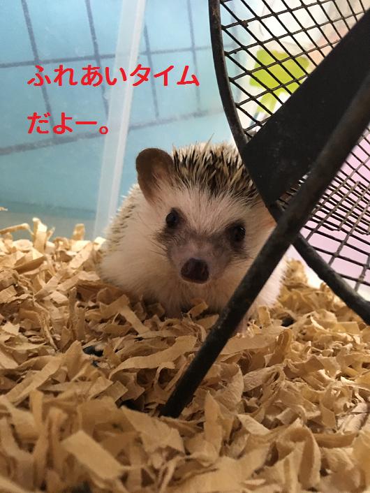 f:id:ogihara0308:20190213212933p:plain