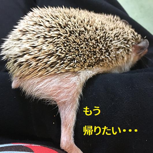 f:id:ogihara0308:20190213213739p:plain