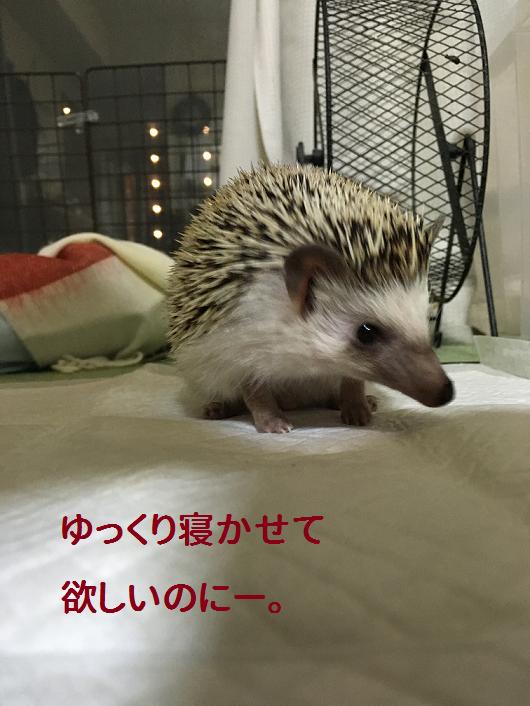f:id:ogihara0308:20190213213835p:plain