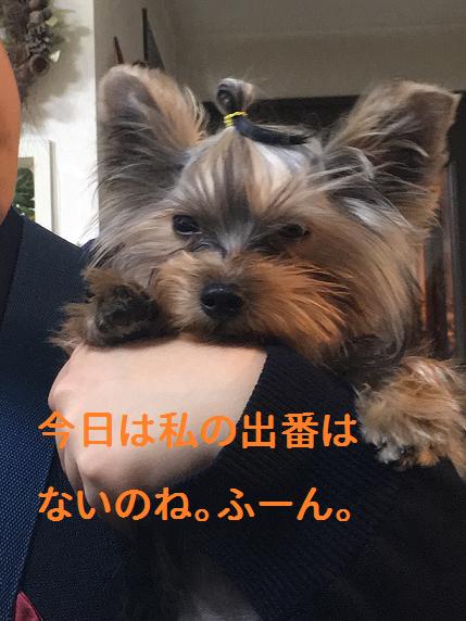 f:id:ogihara0308:20190213213953p:plain