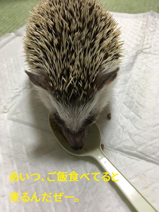 f:id:ogihara0308:20190309163119p:plain