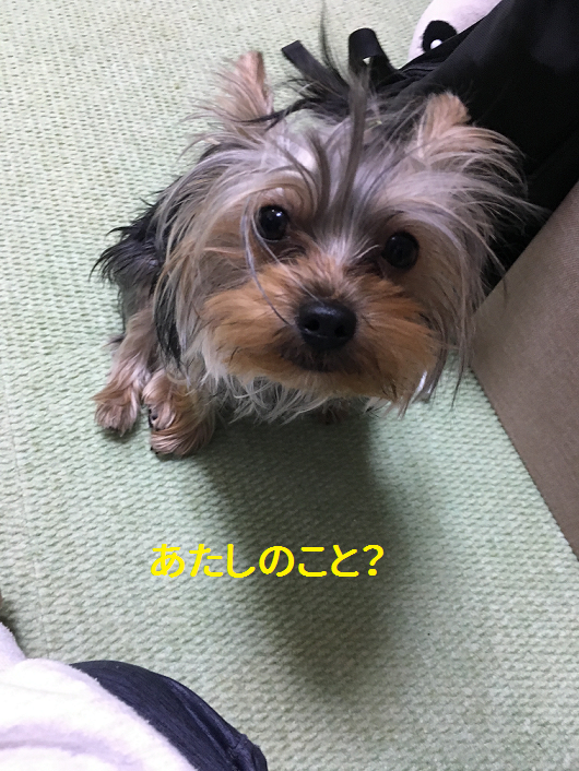 f:id:ogihara0308:20190309163232p:plain