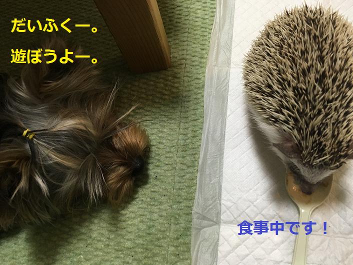 f:id:ogihara0308:20190309163802p:plain