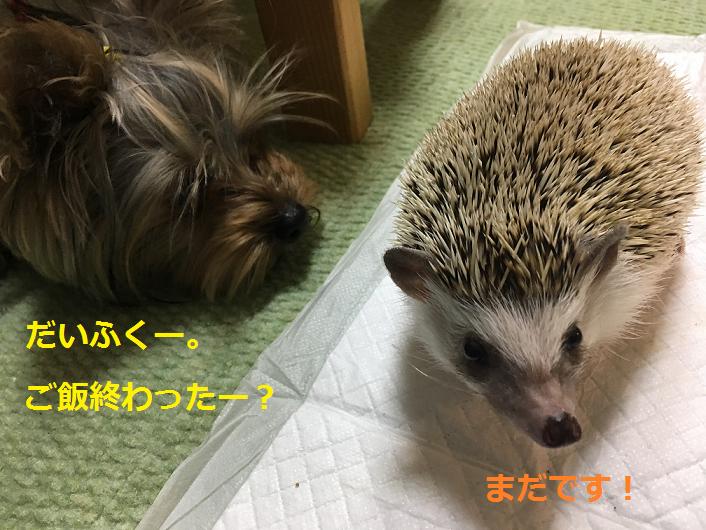 f:id:ogihara0308:20190309163839p:plain