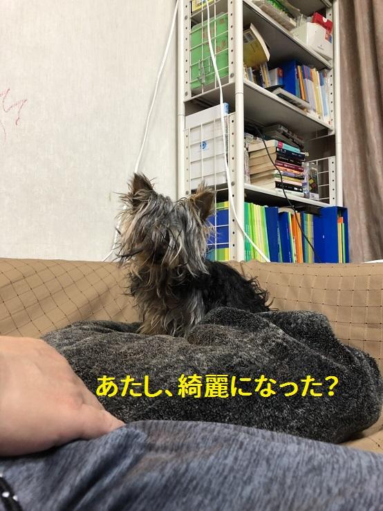 f:id:ogihara0308:20190408211704p:plain