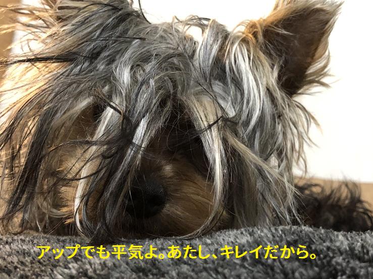 f:id:ogihara0308:20190408211755p:plain