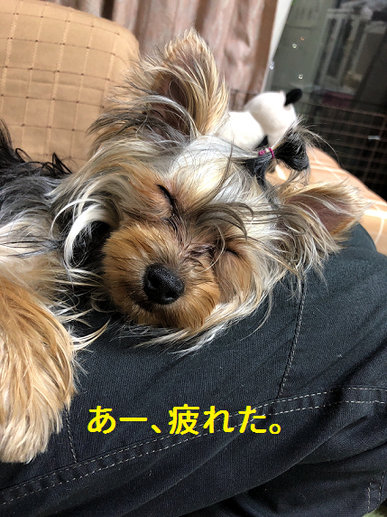 f:id:ogihara0308:20190408212007p:plain