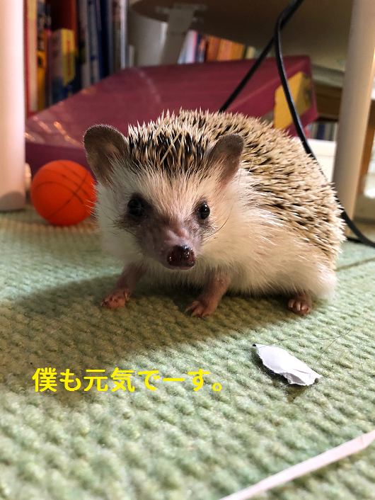 f:id:ogihara0308:20190408212136p:plain